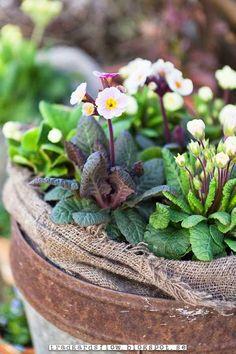 Tiny pretty proud flowers. Spring pot ~ tradgardsflow.blo...