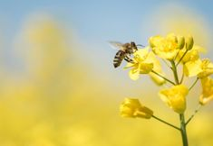 A New Study Reveals Just How Toxic a Bee's World Has Become: Here's what happened when farmers started using a new class of insecticides. You can thank pollinating insects for one of every three bites of food you take. Integrated Pest Management, Plant Tissue, Agricultural Land, Buy Seeds, Canadian Winter, Insect Pest, Wipe Out, Wasp, Gardens