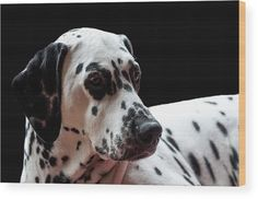 Ms Elegance. Kokkie. Dalmation Dog Wood Print by Jenny Rainbow.  All wood prints are professionally printed, packaged, and shipped within 3 - 4 business days and delivered ready-to-hang on your wall. Choose from multiple sizes and mounting options.