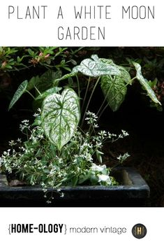 Planting a White (Moon) Garden - Homeology Modern Vintage Growing Flowers, Planting Flowers, Flowering Plants, Home Vegetable Garden, Home And Garden, Container Gardening, Gardening Tips, Fresco, Moon Garden