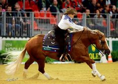 Reining Gold for Team USA | Love that a Woman is winning this prize.  Go Mandy McCutchen!!!