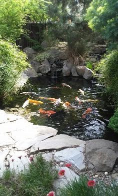My backyard - Koi Pond