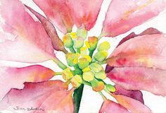 Poinsettia Watercolor Christmas cards set of 10