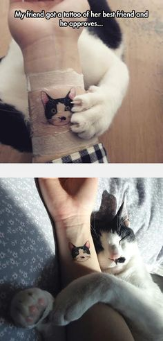 I wouldn't get a tattoo of a pet, but the cat looks adorable :-)