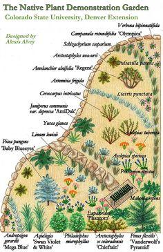 Xeriscape Landscaping Ideas Colorado - Google Search