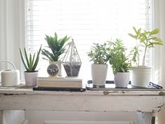 Design*Sponge Sneak Peek:  Main living room plants: When my succulents out-grow my kitchen window pane, they graduate to here. So this is the Class of 2012.