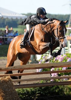 hunter jumper horse equine photo image jump rider equestrian show competition dressage Dressage, Equestrian Outfits, Equestrian Style, Equestrian Fashion, Cow Boys, Show Jumping, Horse Pictures, Horse Photography, Horse Girl