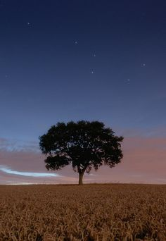 The Plough and crops #tree