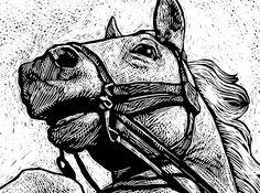 animals | Scratchboard.org