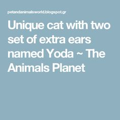 Unique cat with two set of extra ears named Yoda ~ The Animals Planet