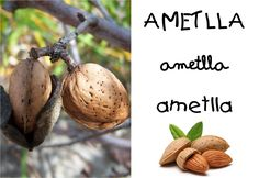 AMETLLA.png (1600×1102)
