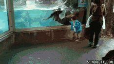 【画像】動物のおもしろいgifが貼られていくスレ : 暇人\(^o^)/速報 - ライブドアブログ