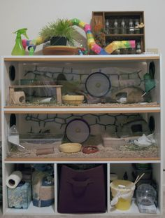 I would turn the bottom shelf into a third level and then store supplies on top of shelf in baskets/bins (if it's a shorter shelf would still be easy to get to). Hamsters As Pets, Pet Rodents, Cute Hamsters, Cool Hamster Cages, Gerbil Cages, Hamster Habitat, Hamster Care, Cool Shelves, Shelf