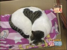 Cat with a big heart!