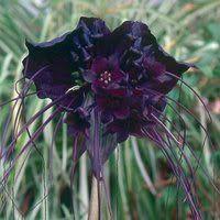 Goth Shopaholic: Goth Gardening Supplies for a Dreary Summer Garden