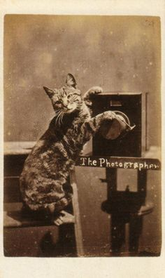 """""""The Photographer"""", a carte from 'The Brighton Cats' series, photographed by Harry Pointer at his Bloomsbury Place studio in Brighton."""