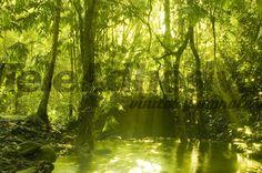 Papier peint vinyle jungle verte