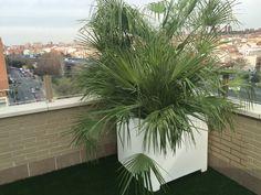 Jardinera decorada con palmera