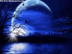 Night Fantasy 1680X1050 Photo
