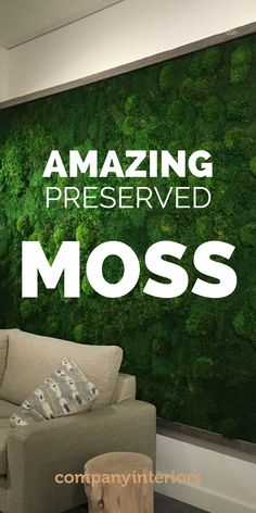 In Our Moss Shop you will find all the products you will need to make moss wall art to build a moss wall using preserved moss. The Moss used in Ball Moss ,Flat Moss and Lichen. The Moss wall requires no maintenance whatsoever. Sustainable sources provide the moss and reindeer moss is a popular product from Scandinavian moss sources. So you can create your own moss wall and install in your office or home. #mosswalls #mosswallart #moss #flatmoss #preservedmoss #mossart