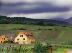 Somewhere in the Alsace region between Riquewihr and Strasbourg  #alsace #alsacetourisme #visitalsace #france #seetheworld #wanderlust #beautifulworld #vineyard #vineyards #travel #travelordie #travelphotography #photography #landcscape #landscapes #landscapephotography #dustysolesblog