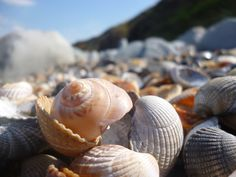 Now here is the reason behind the name. Shell Island, Shells, Seashells, Sea Shells, Clam Shells, Shell