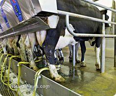 Cornucopia Institute files third legal complaint over alleged violations at Horizon 'Organic' dairy factory farm