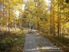 Krásná podzimní vyjížďka na kole s dětmi ve vozíku Croozer