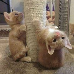 Want more cute kittens? Click the photo for more! #catloverscommunity #catloverscommunity #cats #kittens