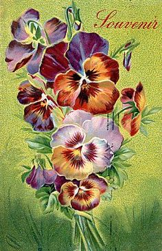 Postcard ~Pansies