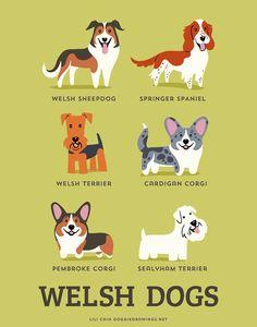 From WALES: Welsh Sheepdog, Springer Spaniel, Welsh Terrier, Cardigan Corgi, Pembroke Corgi, Sealyham Terrier.