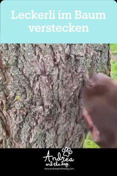 3D Suche - Wieder eine simple Beschäftigungsmöglichkeit in diesem #traningsvideo von uns..... Viel Spaß beim Nachmachen 🐾😊❤️    #andreaandthedog #trainingbyandreaandthedog #hundetraining #beschäftigungfürhunde #hund #hundeliebe #hundeglück #trainingadog #dog #facebookdog #trainingbyfido How To Dry Basil, Herbs, 3d, Dogs, Searching, Pet Dogs, Herb, Doggies, Medicinal Plants