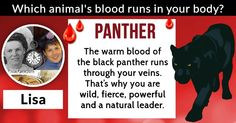 You are really untamable and your strength is unmatched because a special kind of blood flows through your veins. You are wild, free and always yourself! You go your own way and lead an independent life! Share your result with your friends so they can also find out what type of animal blood runs through their veins!