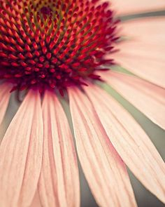 Title: Flower Power  Size: 8x10    Save up to 50% on this photo by ordering it as part of a set here: