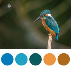 Fly me to the moon #designinspiration #love #prettythings #color #mind #graphic #design #search #the #color #palettes #dream #bird #inspiration#designlovers#designinspo #blue #orange#lightblue#designlovers #ideas #searchthecolor #travel #instatravel #nature #sweet #cute #colibri
