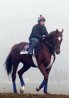 2011 Kentucky Derby Winner and now 2013 Dubai World Cup Animal Kingdom