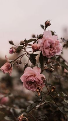Iphone Wallpaper Vintage Flower, Rose Flower Wallpaper, Live Wallpaper Iphone, Mood Wallpaper, Flower Backgrounds, Beautiful Wallpapers For Iphone, Best Iphone Wallpapers, Wallpaper Free Download, Wallpaper Downloads