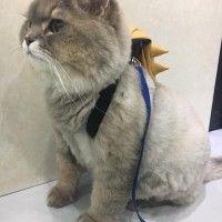 #dogalize Bone Bone, il gatto più morbido del mondo #dogs #cats #pets