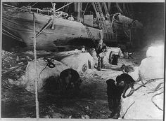 C.1916 Shackleton Antarctic Expedition Dogs by InterestingPhotos, $7.95