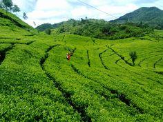 Tempat Wisata Di Bogor Yang Mengasyikan Untuk Dikunjungi
