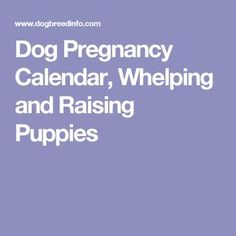 Dog Pregnancy Calendar, Whelping and Raising Puppies