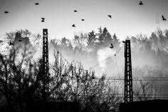 black birds II