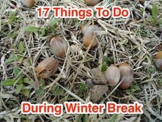 17 Things To Do During Winter Break
