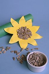 Sunflower craft to make as we watch our real sunflowers grow.