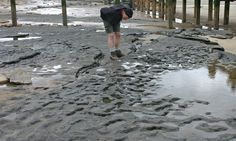 850000-year-old human footprints found in Norfolk