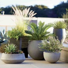 Container Gardening Ideas Container gardening pots - Create a gorgeous outdoor area with our container garden ideas. See the three essential elements for container gardening. Outdoor Planters, Garden Planters, Outdoor Gardens, Potted Garden, Concrete Planters, Rock Planters, Window Planters, Diy Planters, Container Plants