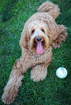 Daily Dog: Sam with Ball