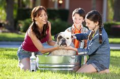 New Dog Shampoo May Help To Alleviate Allergic Reactions to Dogs