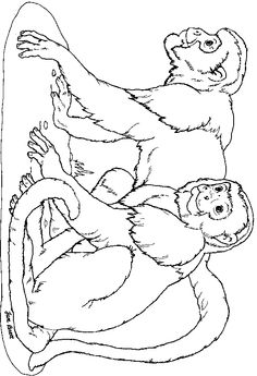 On Noah's Ark Monkeys