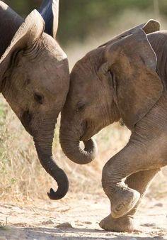 Mijn favoriete dieren... sterk, krachtig, intelligent en met menselijke liefdevolle eigenschappen... Dol op olifanten !